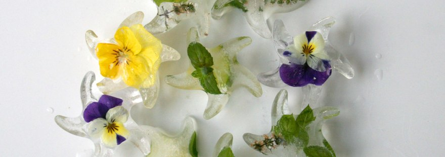 Botanical Ice Cubes - an easy way to add interest to drinks | The Pink Rose Bakery